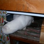Casper found a place to hide